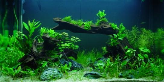 pflanzen wurzel bepflanzen aquarium forum. Black Bedroom Furniture Sets. Home Design Ideas